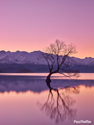 Commercial Image Licensing - New Zealand Wanaka Tree