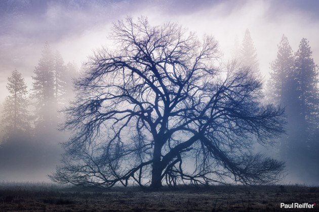 "Location : Yosemite, USA <a href=""https://www.paulreiffer.com/buy-prints/the-faraway-tree/"">- Buy the limited edition print</a>"